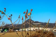 Día del otoño en la plaza de Gwanghwamun Fotos de archivo libres de regalías