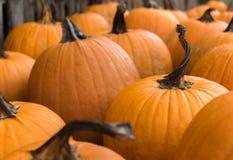 Día del remiendo de Pumpkim Imagen de archivo libre de regalías