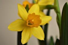 Día del `s de la tarjeta del día de San Valentín Primavera Imágenes de archivo libres de regalías