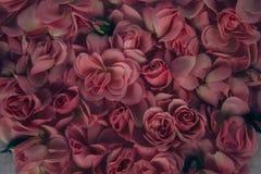 Día del `s de la tarjeta del día de San Valentín Rosas hermosas Imágenes de archivo libres de regalías