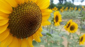 día del sol de domingo Fotografía de archivo libre de regalías