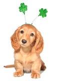 Día del St Patricks Imagen de archivo