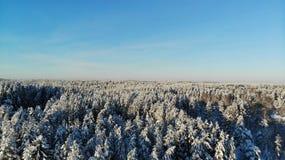 Día escarchado claro en los árboles forestales cubiertos con nieve Opinión del ojo del ` s del pájaro Región de Rusia St Petersbu fotos de archivo