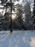 Día escarchado en el bosque Fotografía de archivo