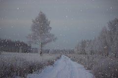Día escarchado en el bosque del invierno Foto de archivo