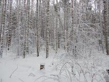 Día escarchado en Siberia imagenes de archivo