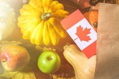 Día feliz de la acción de gracias en Canadá Hojas de las verduras, de las calabazas, de la calabaza, de las manzanas, del arce y  Imágenes de archivo libres de regalías