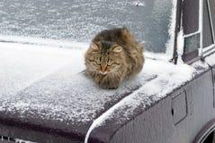 Día frío imagen de archivo