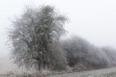 Día frío en el campo, la niebla y la helada franceses Fotos de archivo libres de regalías