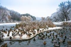 Día hermoso del invierno en parque cerca del lago congelado con Foto de archivo libre de regalías