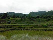 Día Himalayan de Paddy Fields During Overcast Monsoon del arroz Imagen de archivo