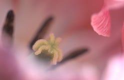 Día lilly Foto de archivo