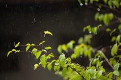 Día lluvioso Foto de archivo libre de regalías