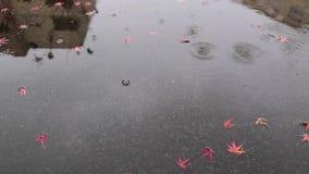 Día lluvioso almacen de video