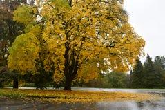 Día lluvioso del otoño en un parque Fotografía de archivo libre de regalías