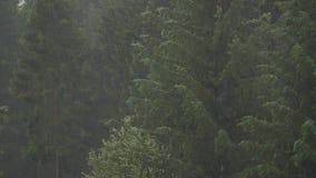 Día lluvioso en el bosque metrajes