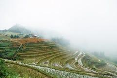 Día lluvioso en el campo del arroz Foto de archivo