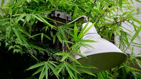 Día lluvioso en el jardín, la lluvia cayó en el bambú y las hojas, lluvia torrencial, sombra de lámpara, las gotas de agua y soni almacen de video