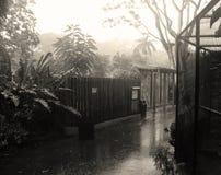 Día lluvioso en el parque zoológico Foto de archivo libre de regalías