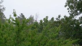 Día lluvioso Lluvia del verano contra un fondo de árboles verdes metrajes