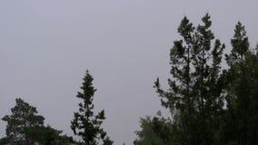 Día lluvioso Lluvia del verano contra un fondo de árboles y del cielo almacen de metraje de vídeo