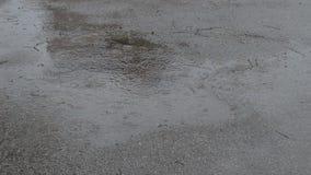 Día lluvioso y charco almacen de video