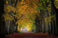 Día mojado del otoño en un bosque holandés Fotografía de archivo