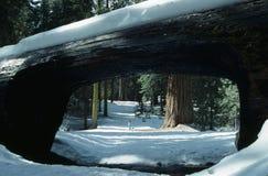 Día Nevado Fotografía de archivo libre de regalías