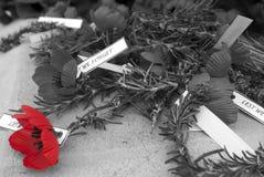 Día rojo de la conmemoración del día del anzac de la amapola Imágenes de archivo libres de regalías