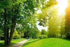 Día soleado brillante en parque Los rayos de Sun iluminan la hierba verde y el tr fotografía de archivo libre de regalías