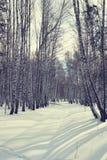 Día soleado brillante en un bosque del abedul del invierno Foto de archivo libre de regalías