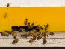 Día soleado de la abeja en medio de abejas amarillas de la casa Foto de archivo libre de regalías