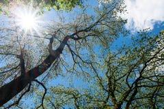 Día soleado debajo del follaje de las ramas de árbol y del cielo azul del claro Imágenes de archivo libres de regalías