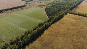 Día soleado del girasol de los campos de una altura almacen de video
