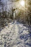 Día soleado del invierno en el bosque nevado de Frost del bosque en la nieve Imagenes de archivo