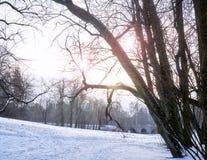 Día soleado del invierno en el parque Los rayos del sol brillan a través de los árboles Imágenes de archivo libres de regalías