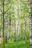 Día soleado del verano en la madera Fotos de archivo