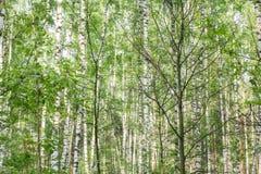 Día soleado del verano en la madera Imagenes de archivo