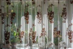 Día soleado detrás de la cortina Foto de archivo libre de regalías
