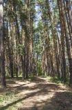 Día soleado en el bosque Imágenes de archivo libres de regalías