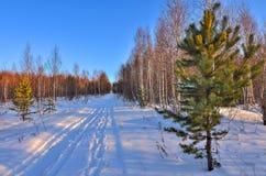 Día soleado en el bosque del invierno Foto de archivo