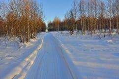 Día soleado en el bosque del invierno Imágenes de archivo libres de regalías