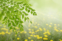 Día soleado en el bosque, fondos abstractos de la primavera o del verano Foto de archivo