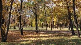 Día soleado en el parque público del otoño almacen de metraje de vídeo