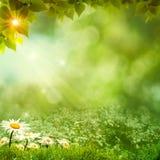 Día soleado en el prado