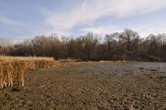 Día soleado en la llanura de inundación del río de Dnieper Fotos de archivo libres de regalías