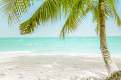 Día soleado en la playa tropical asombrosa con la palmera Imagen de archivo libre de regalías