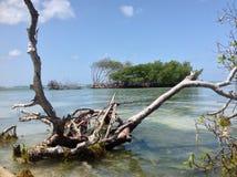 Día soleado en playa del mangle Foto de archivo
