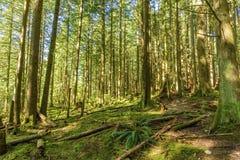 Día soleado en un bosque denso, verde, subtropical, con el árbol cubierto de musgo Fotografía de archivo libre de regalías