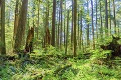 Día soleado en un bosque denso, verde, subtropical, con el árbol cubierto de musgo Foto de archivo